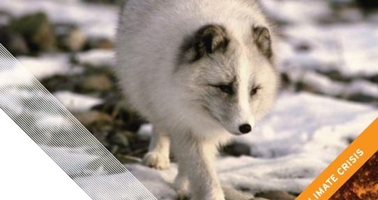 wildlifeclimatecrisis